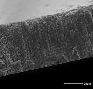 Fractographie d'un dépôt de fer sur lame de verre